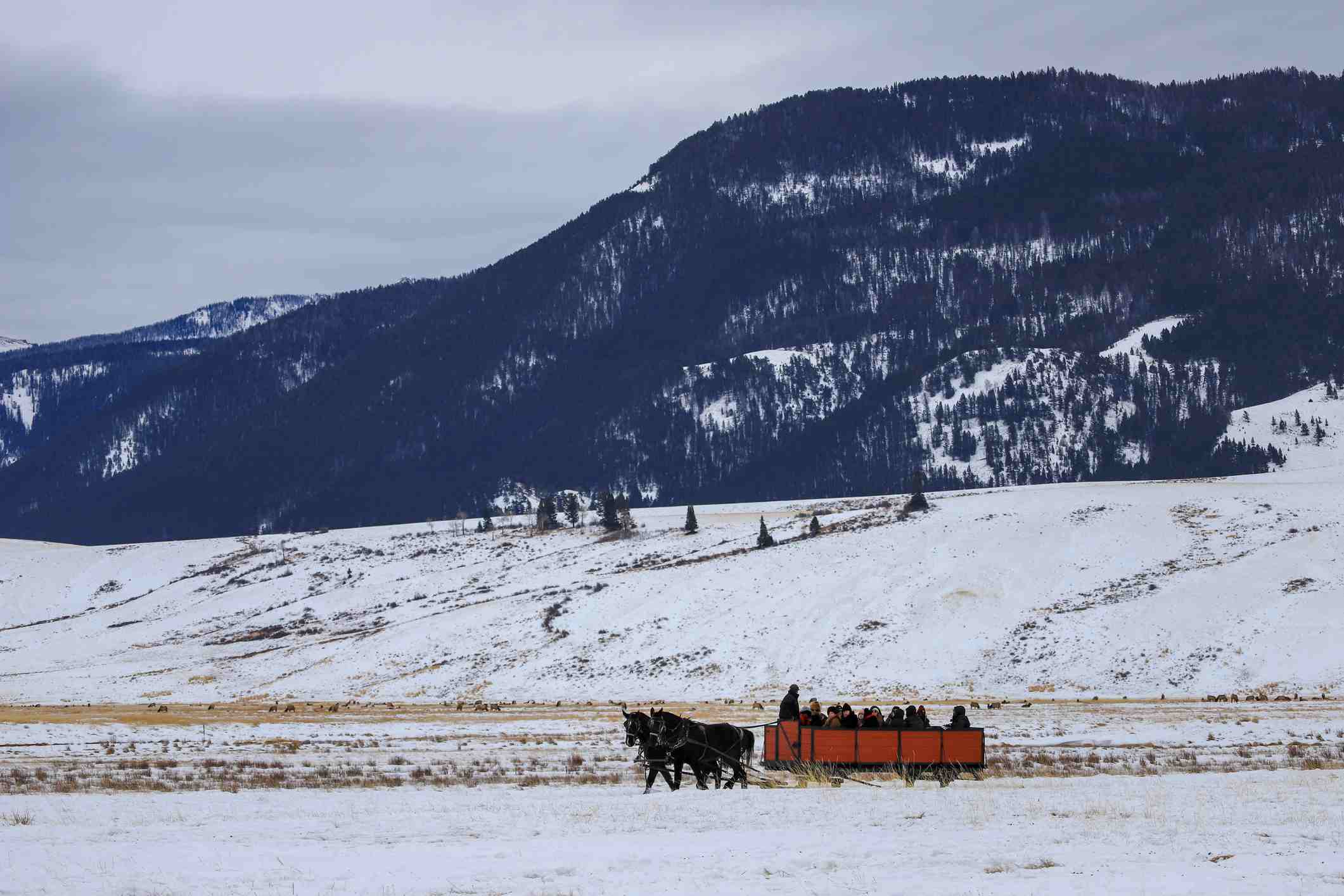 Sleigh Ride on the National Elk Refuge in Wyoming