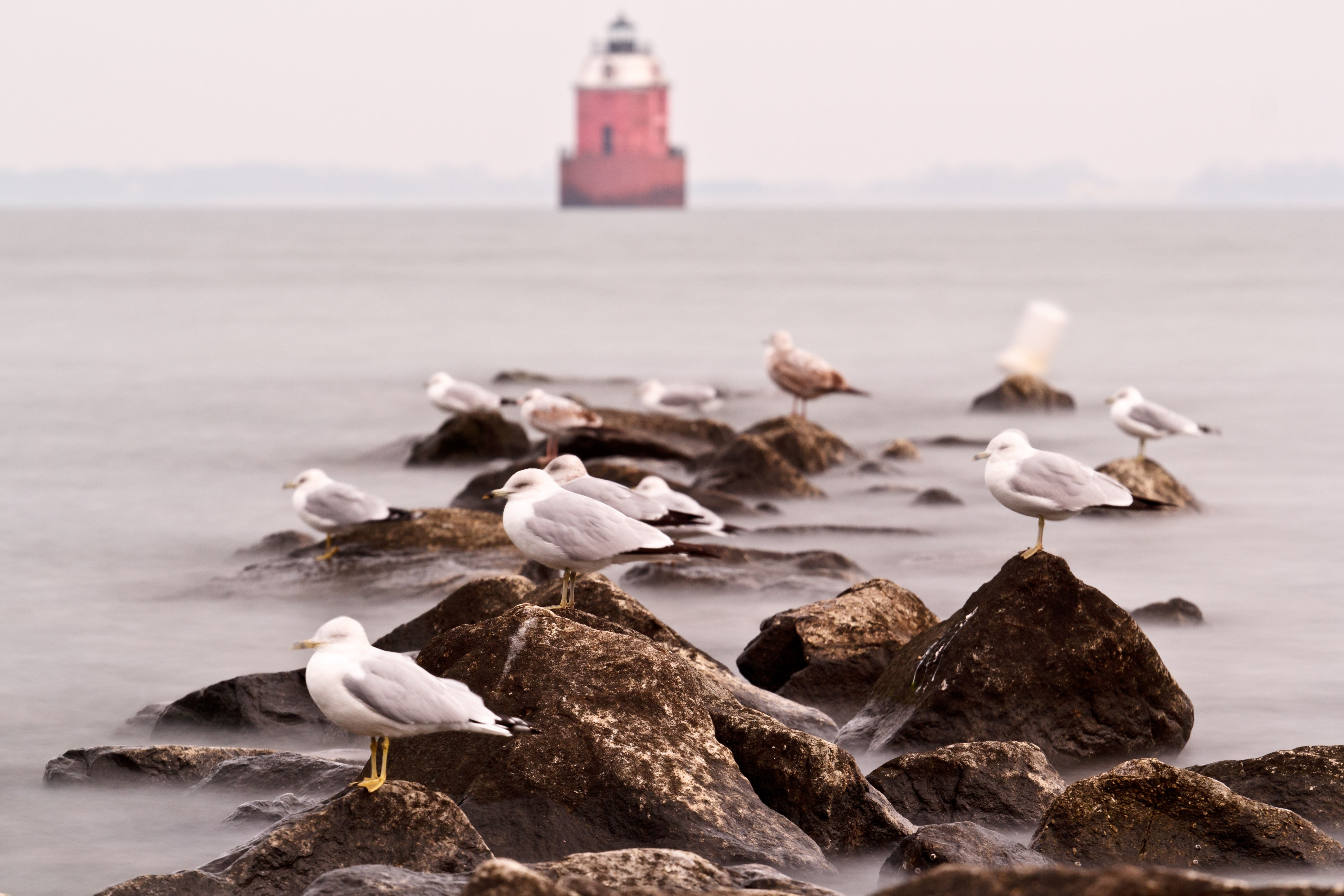 Seagulls perched on rocks in front of lighthouse