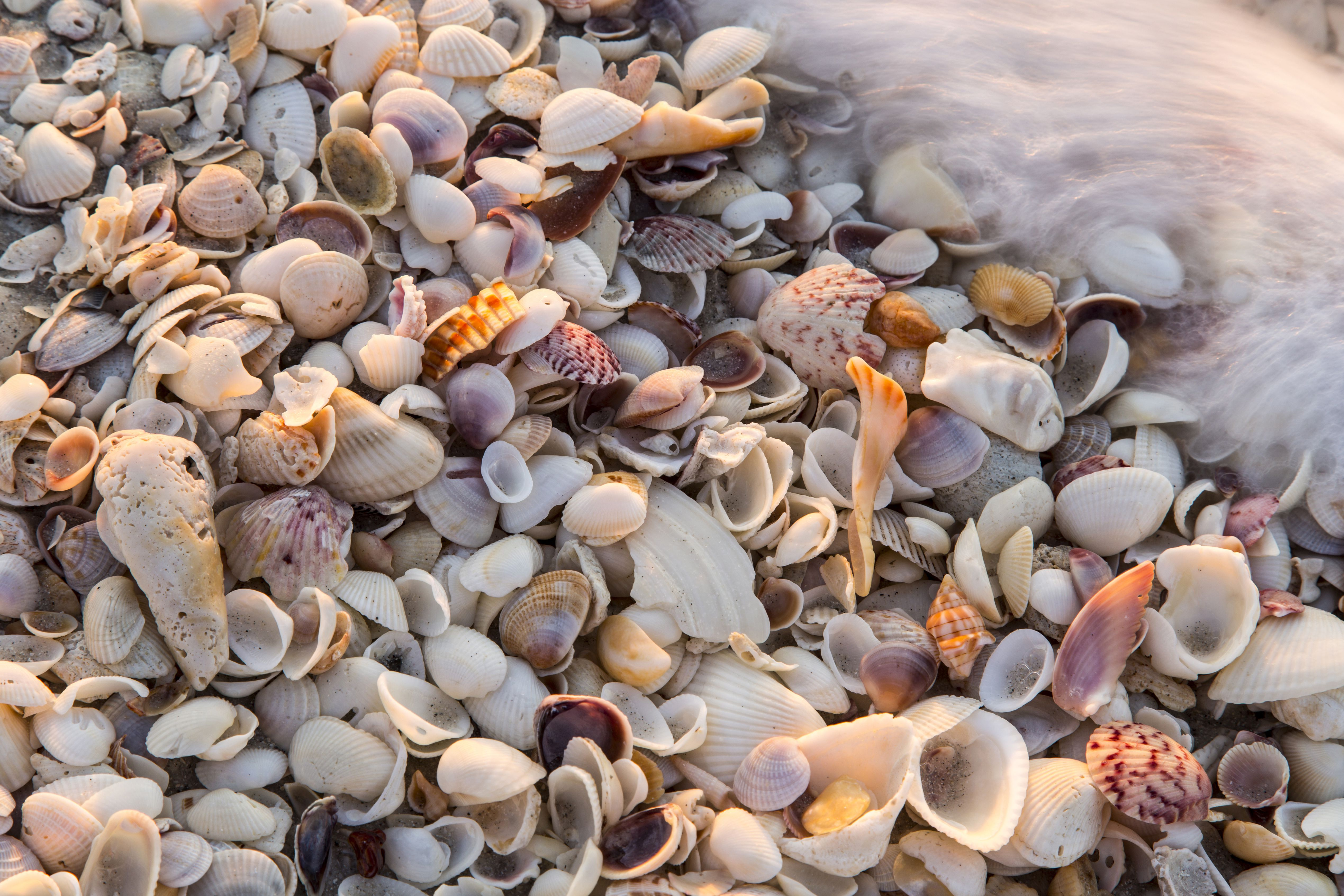 Tips On How To Clean Seashells The Right Way