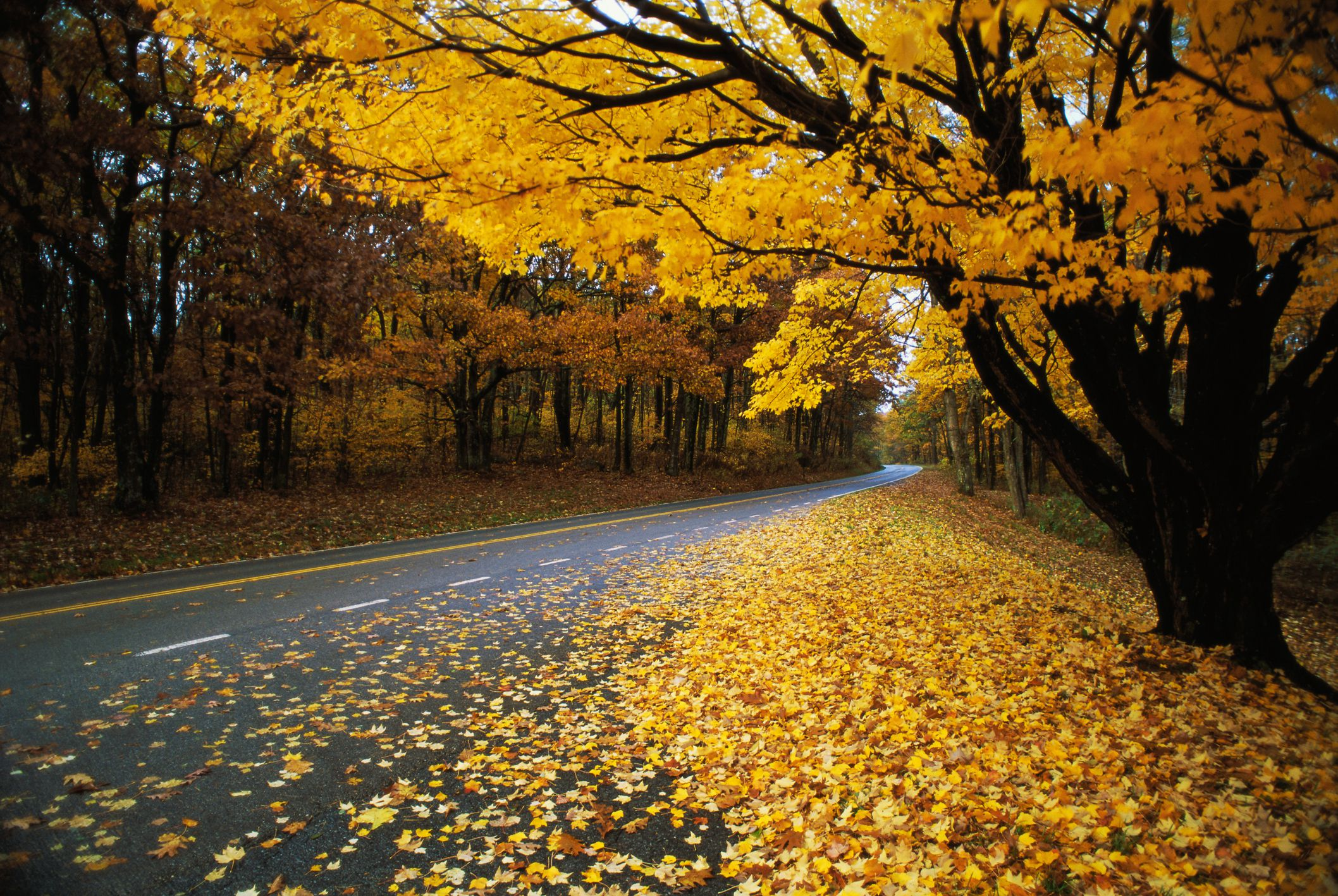 Autumn Leaves on a Rural Road