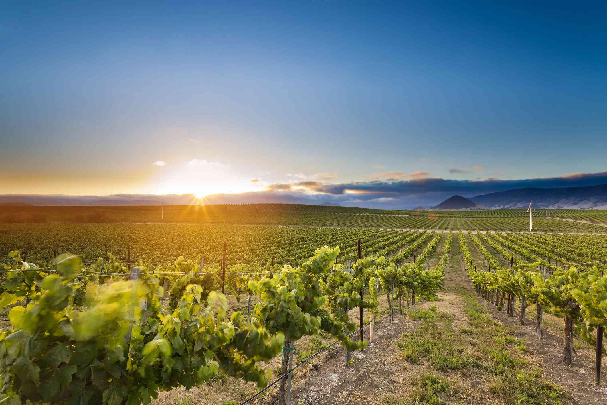 12 Things to Do in San Luis Obispo