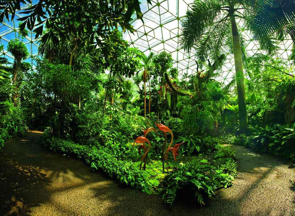Tropical plants inside the Climatron at Missouri Botanical Garden