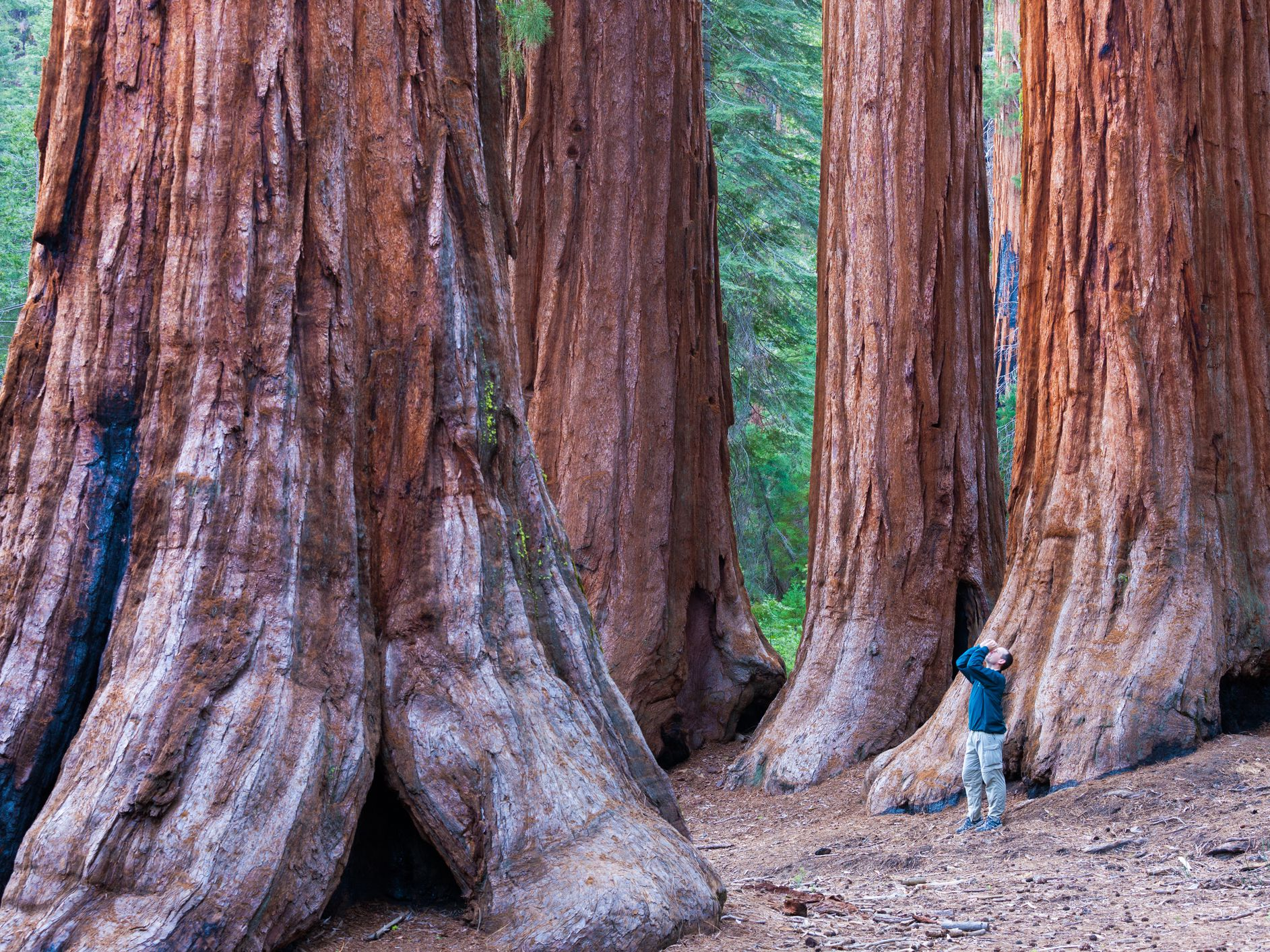 California Redwood Forests Where To
