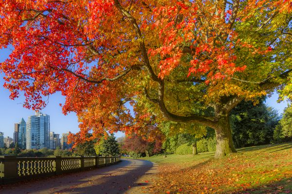 Fall colour, Stanley Park seawall, Vancouver, British Columbia, Canada.