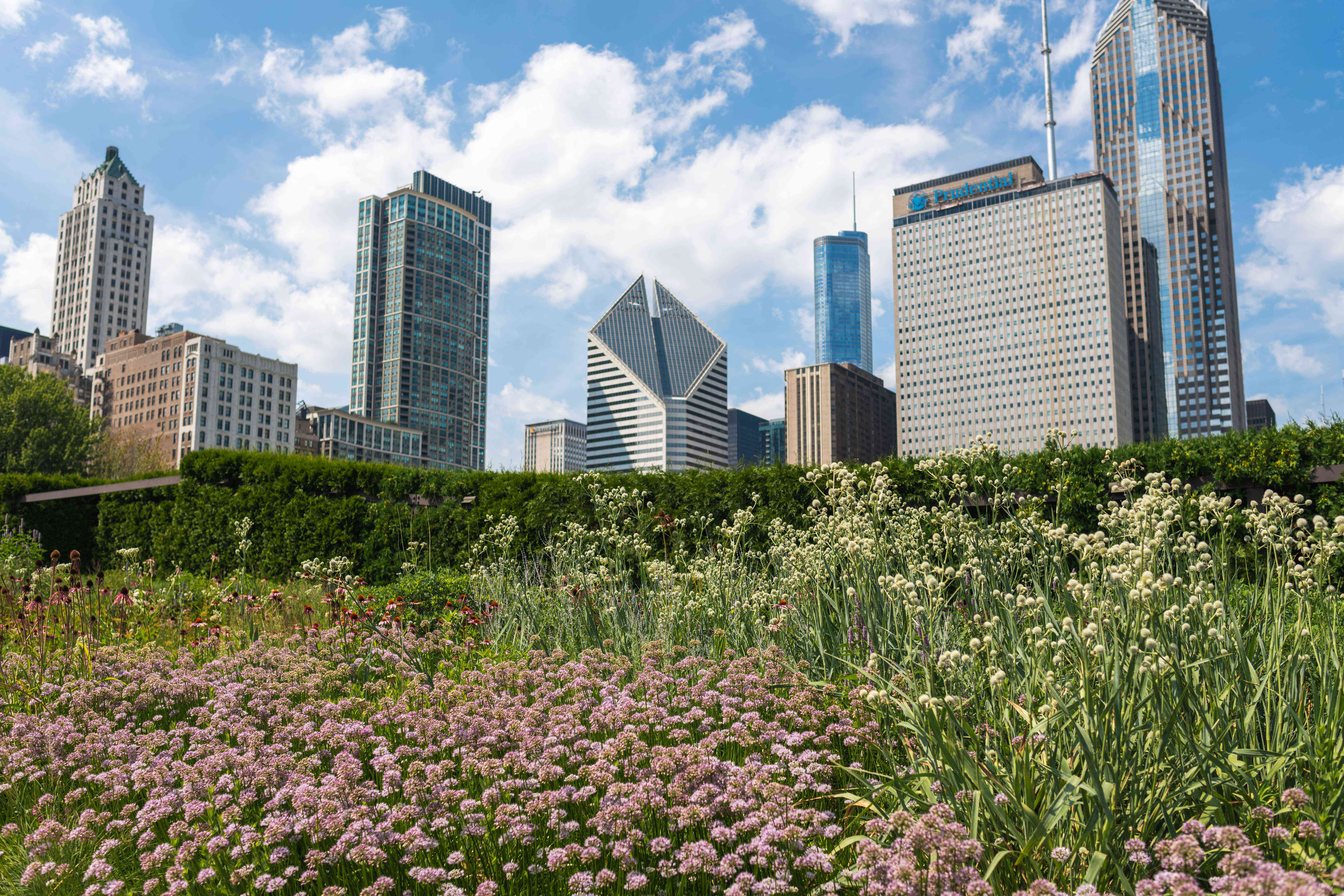 Lurie Garden with the Chicago skyline in the background
