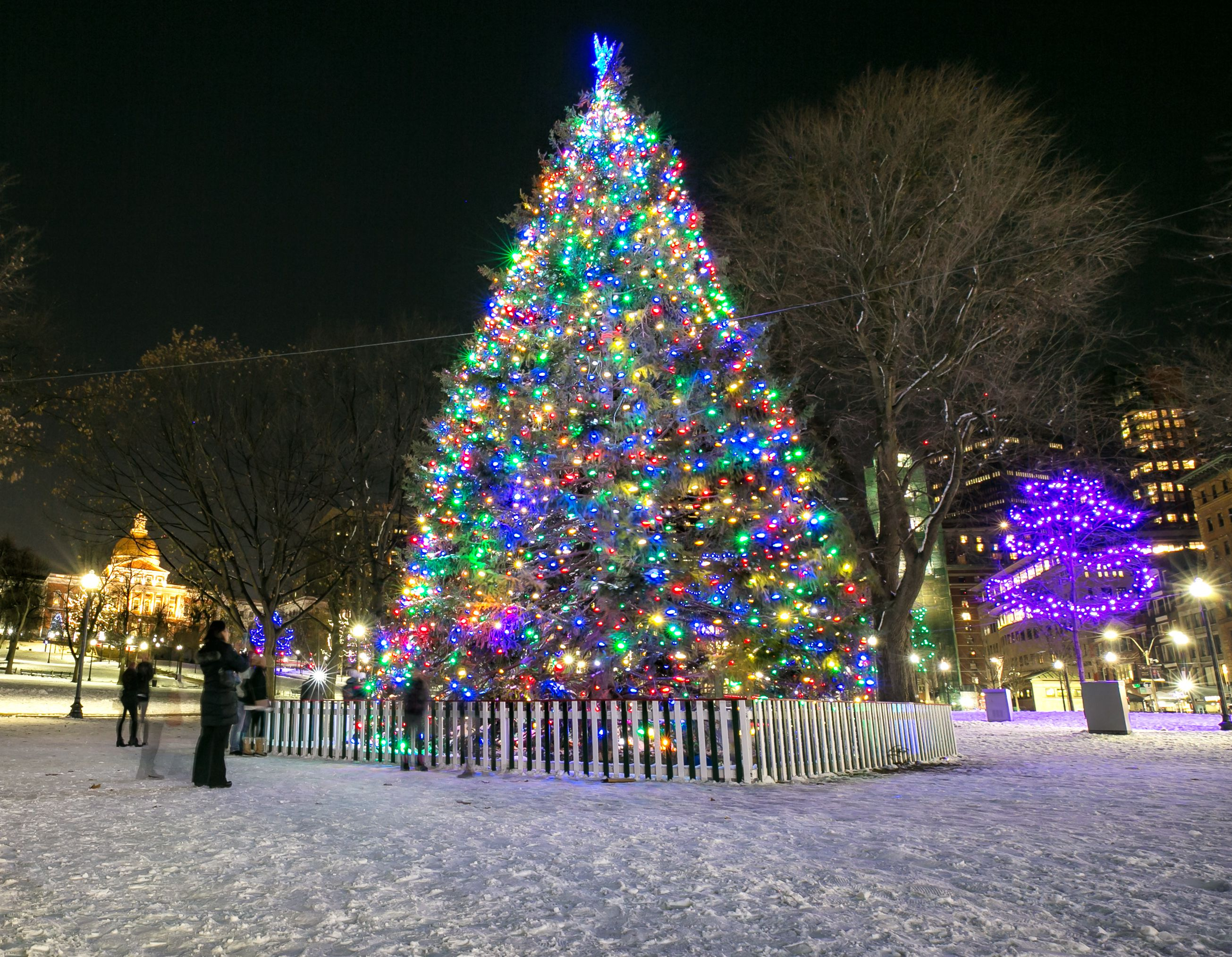 Best Christmas Trees.The Best Christmas Trees And Displays To See In Boston