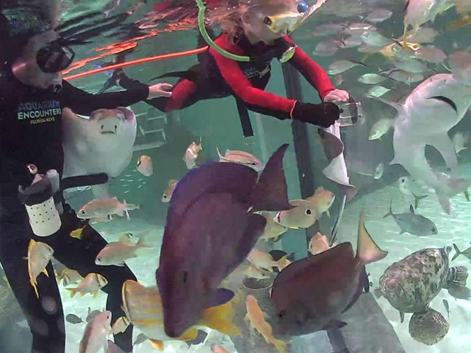 Kid Friendly Restaurants Near Boston Aquarium