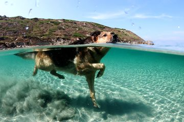 Dog swimming in Cabras, Italy