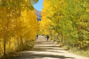Mountain bikers and hikers are enjoying a beautiful autumn day in a colorful aspen grove on the historic Boreas Pass, near the ski resort of Breckenridge, Colorado, USA.