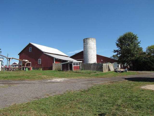 Homestead Farms