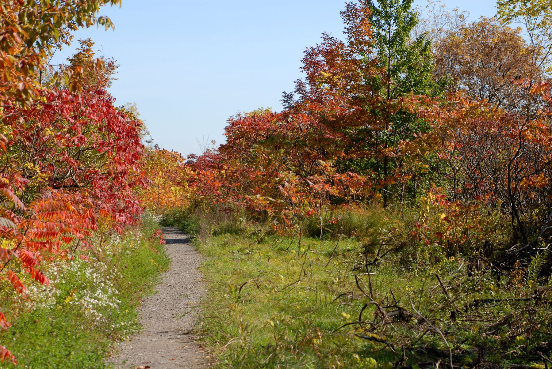 Part of Bruce Trail surrounded by fall foliage.