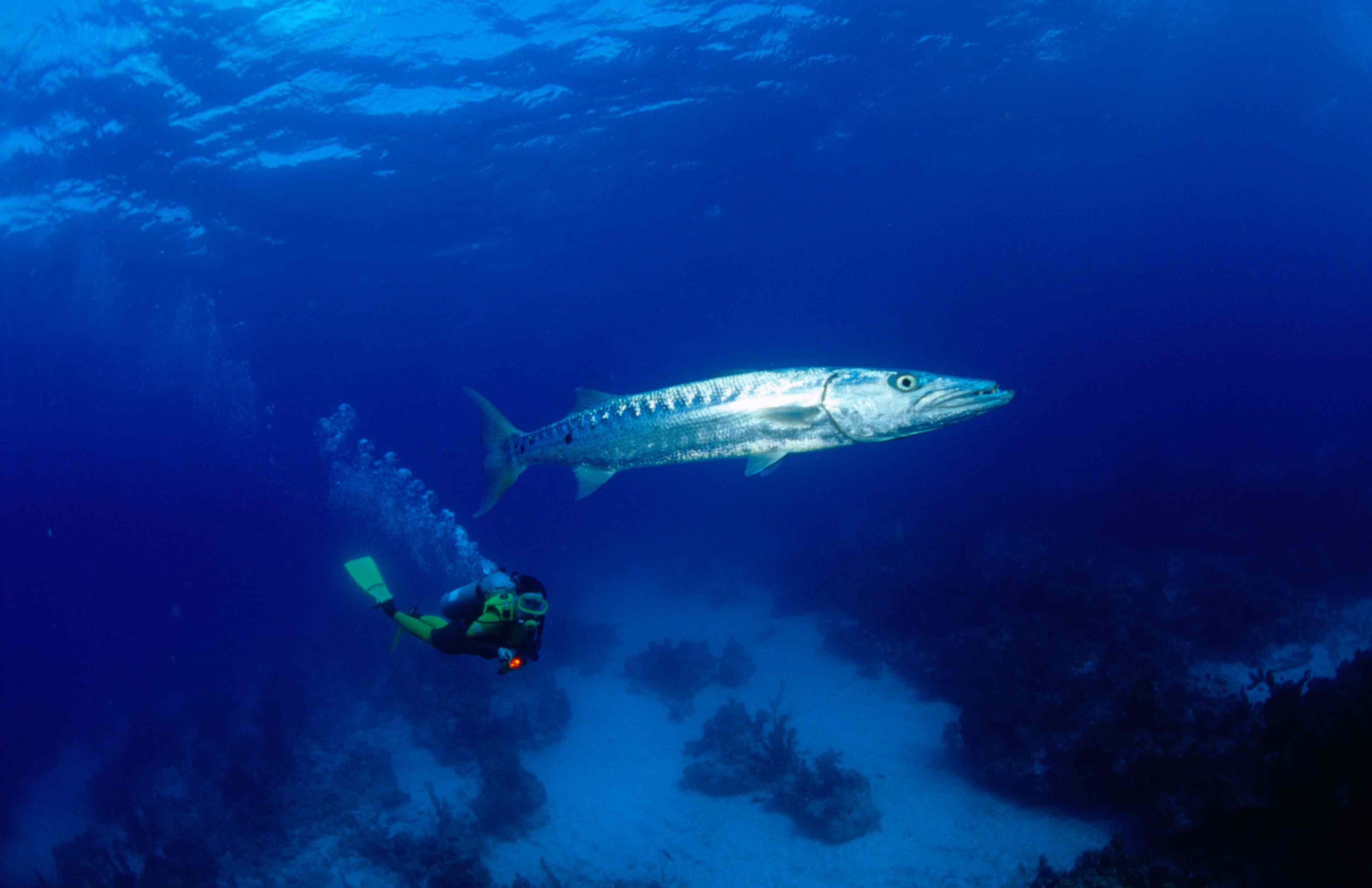 Long Caye Lighthouse Reef