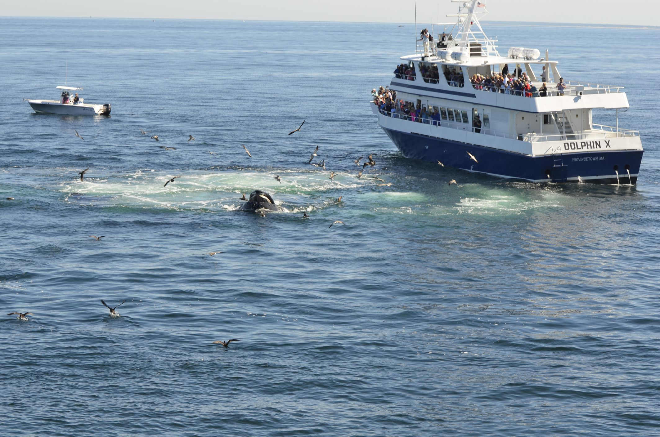 The 7 Best New England Whale Watching Tours Of 2019
