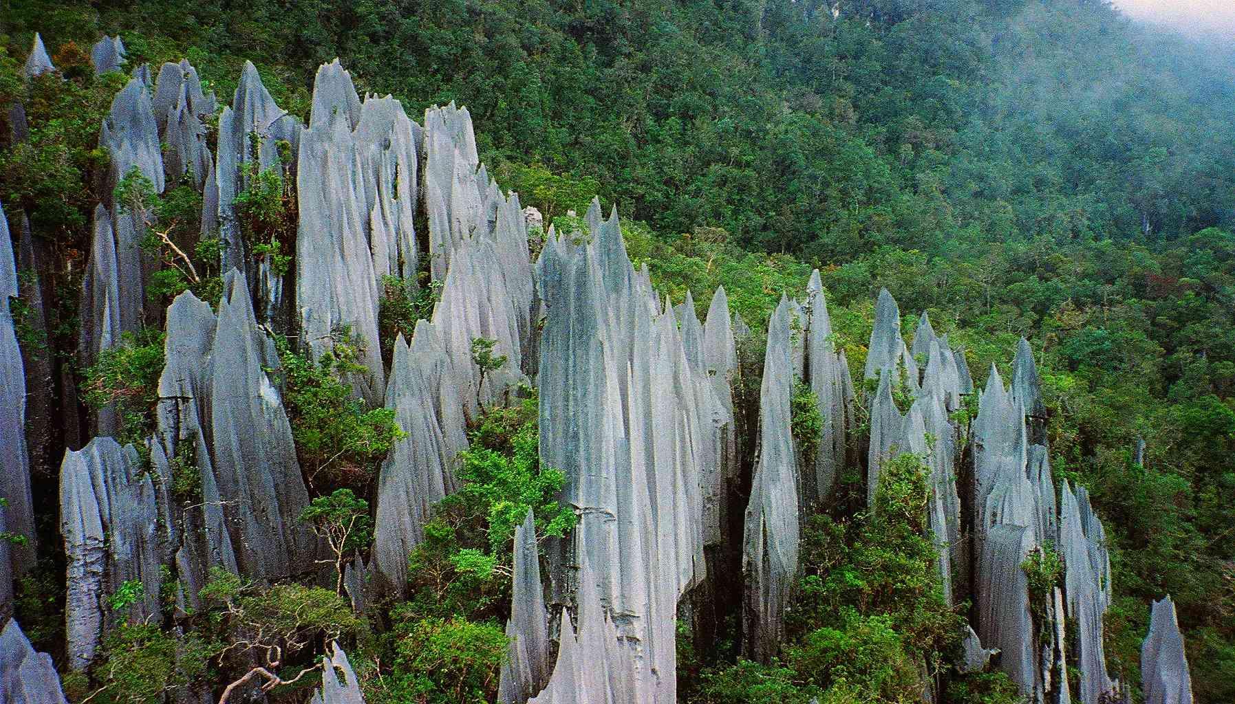 Pináculos de piedra caliza, Parque Nacional Mulu