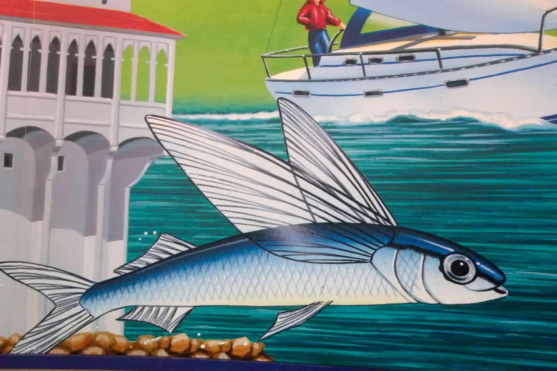Catalina Island Flying Fish