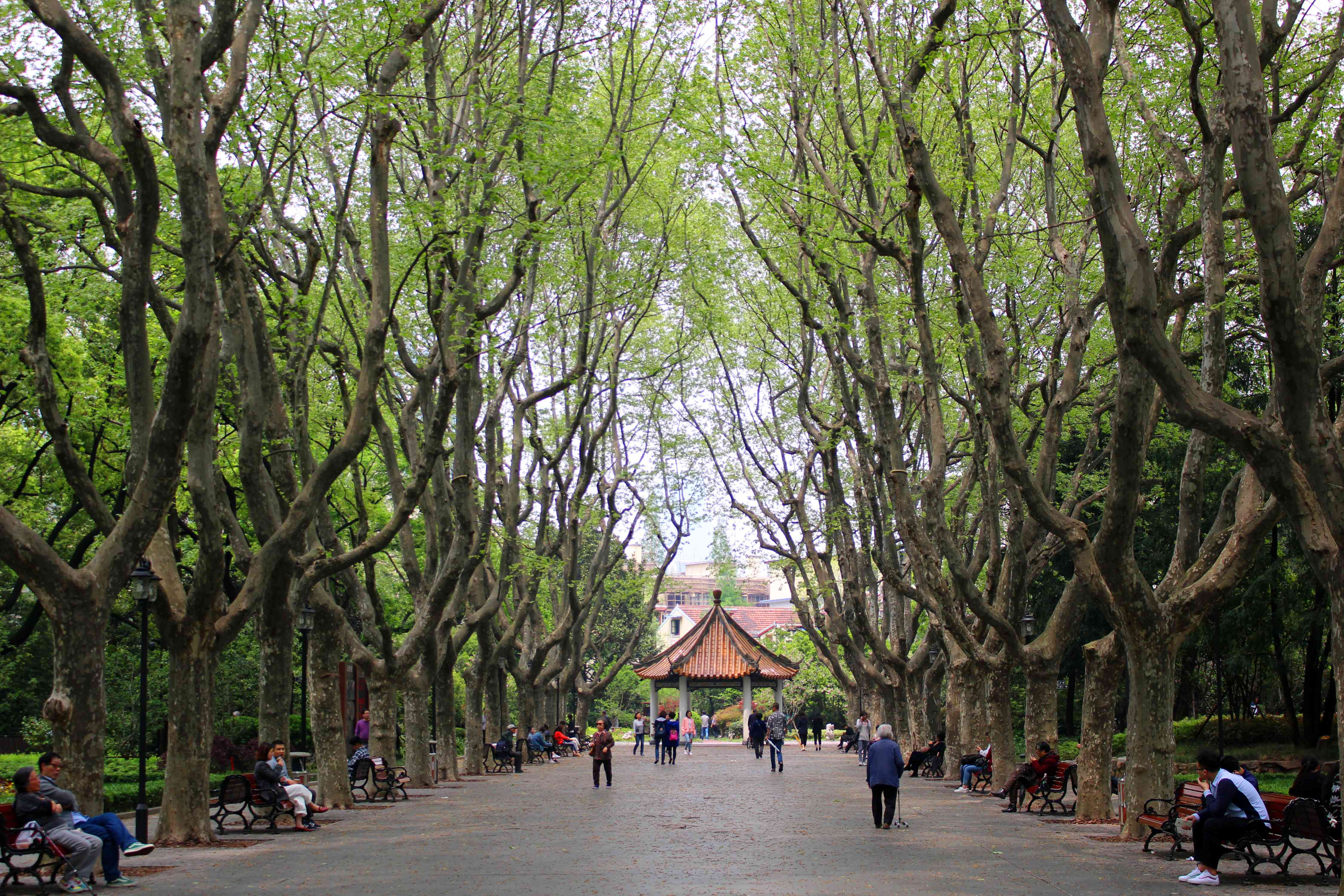 Tree-lined park in Shanghai's French Concession