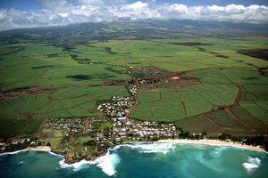 Aerial View of Sugar Cane Fields in Kahului, Hawaii