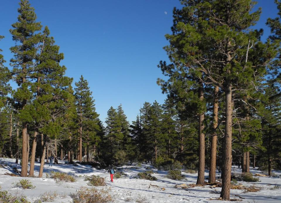 Cut your own Christmas tree in the Reno / Tahoe area.