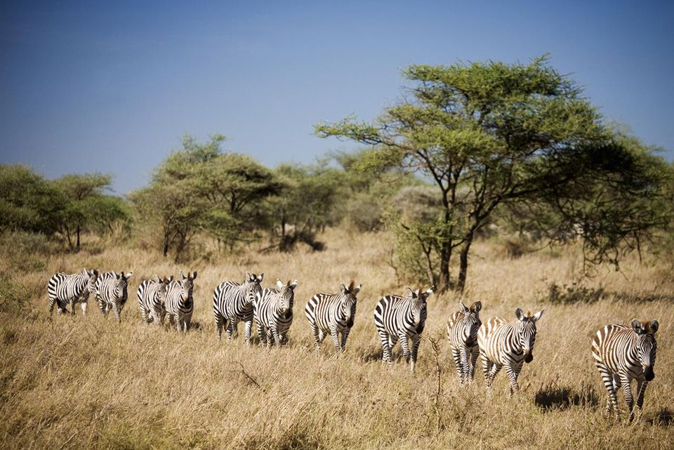 eb2db209aaca Plan your Tanzanian safari trip with this trip planner