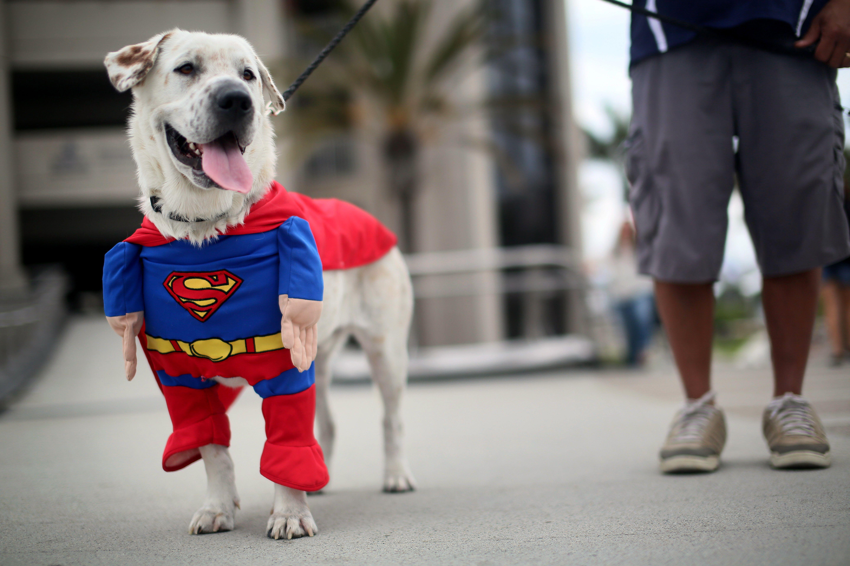 супергерои животные фото