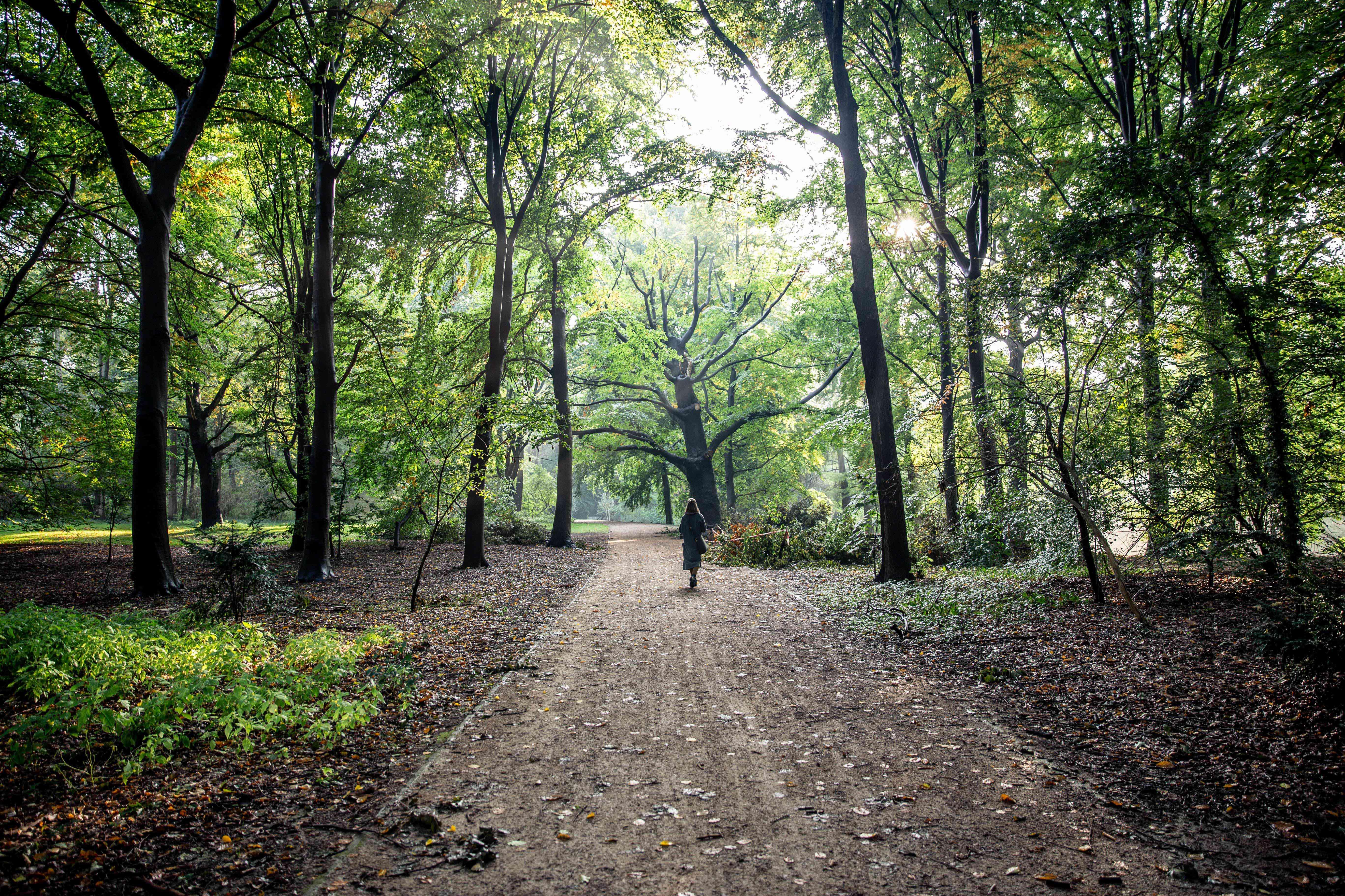 A woman walking through Tiergarten