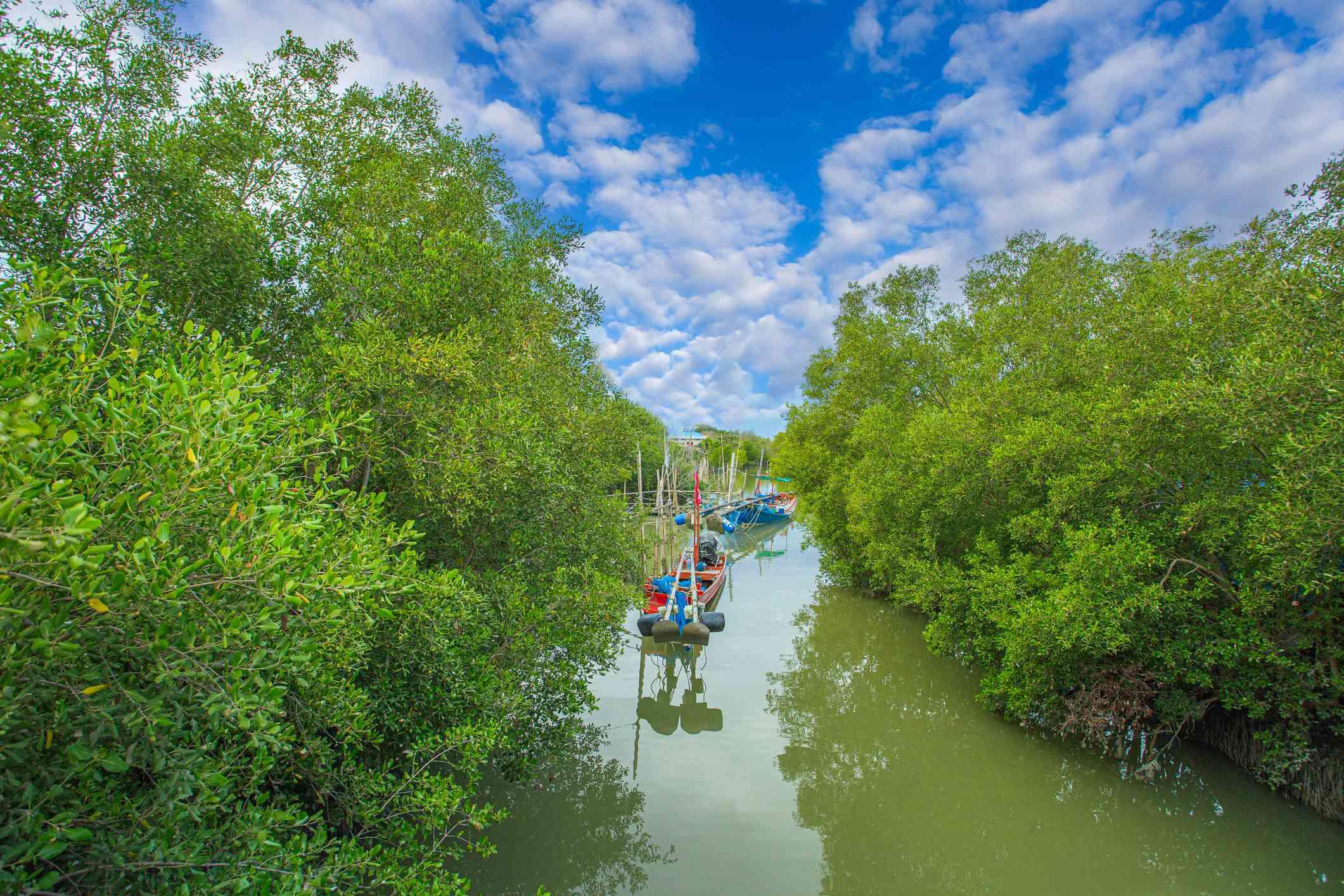 Can Gio Biosphere Reserve, Vietnam