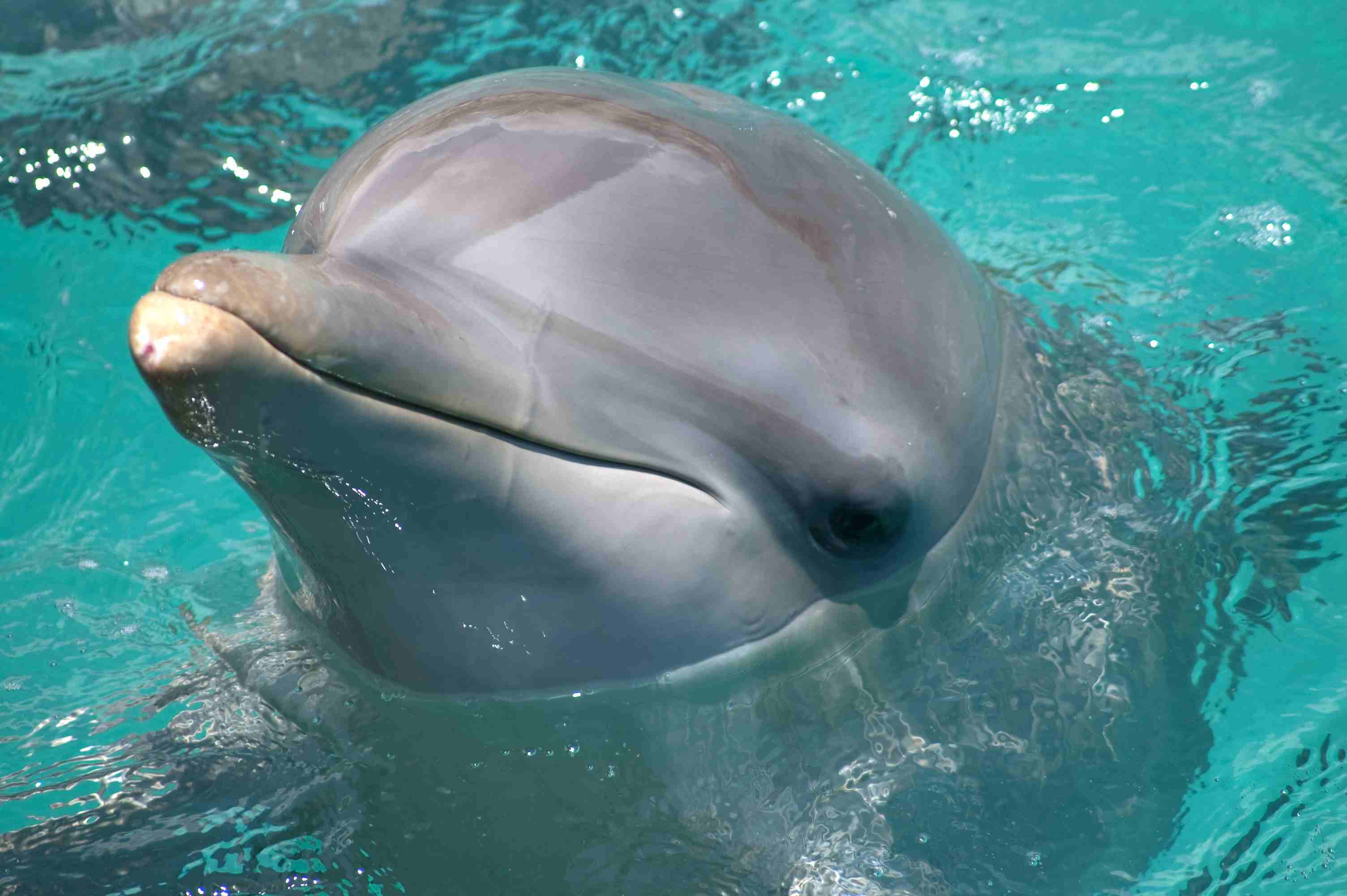 dolphin popping their head out of the water.