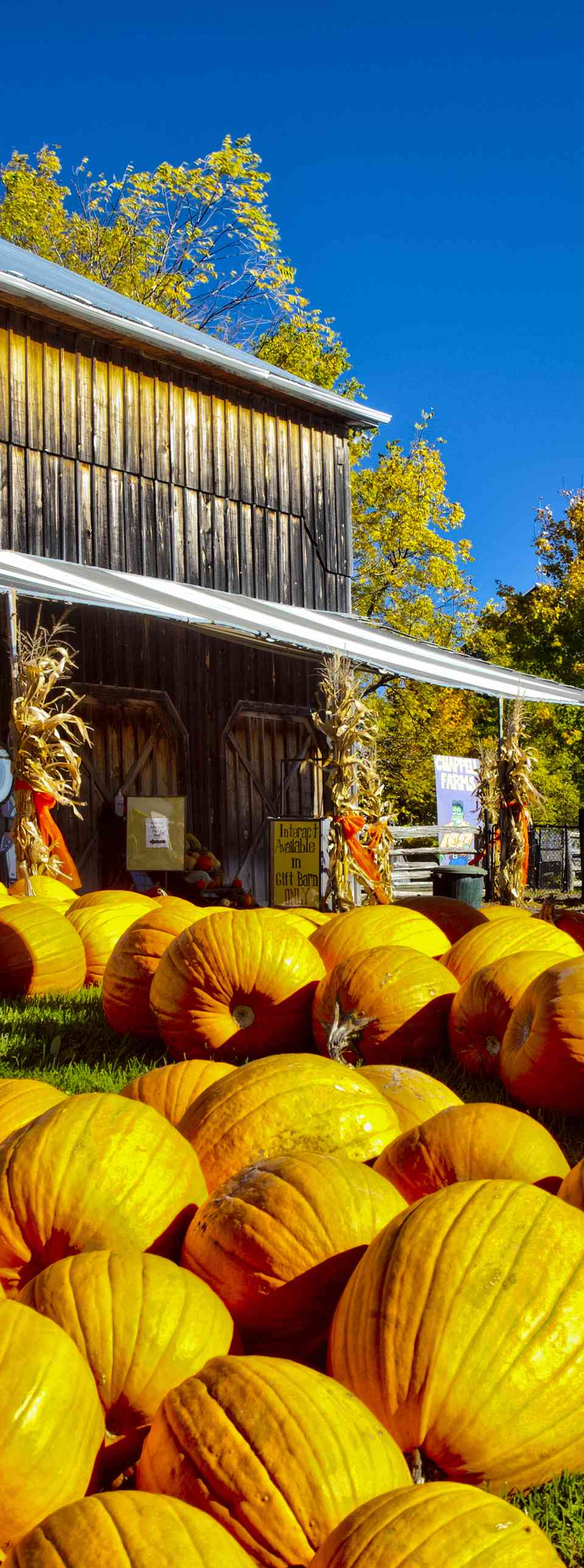 Pumpkins for sale at a farm near Barrie in Ontario, Canada