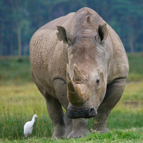 Rhino Kenya Aberdare National Park