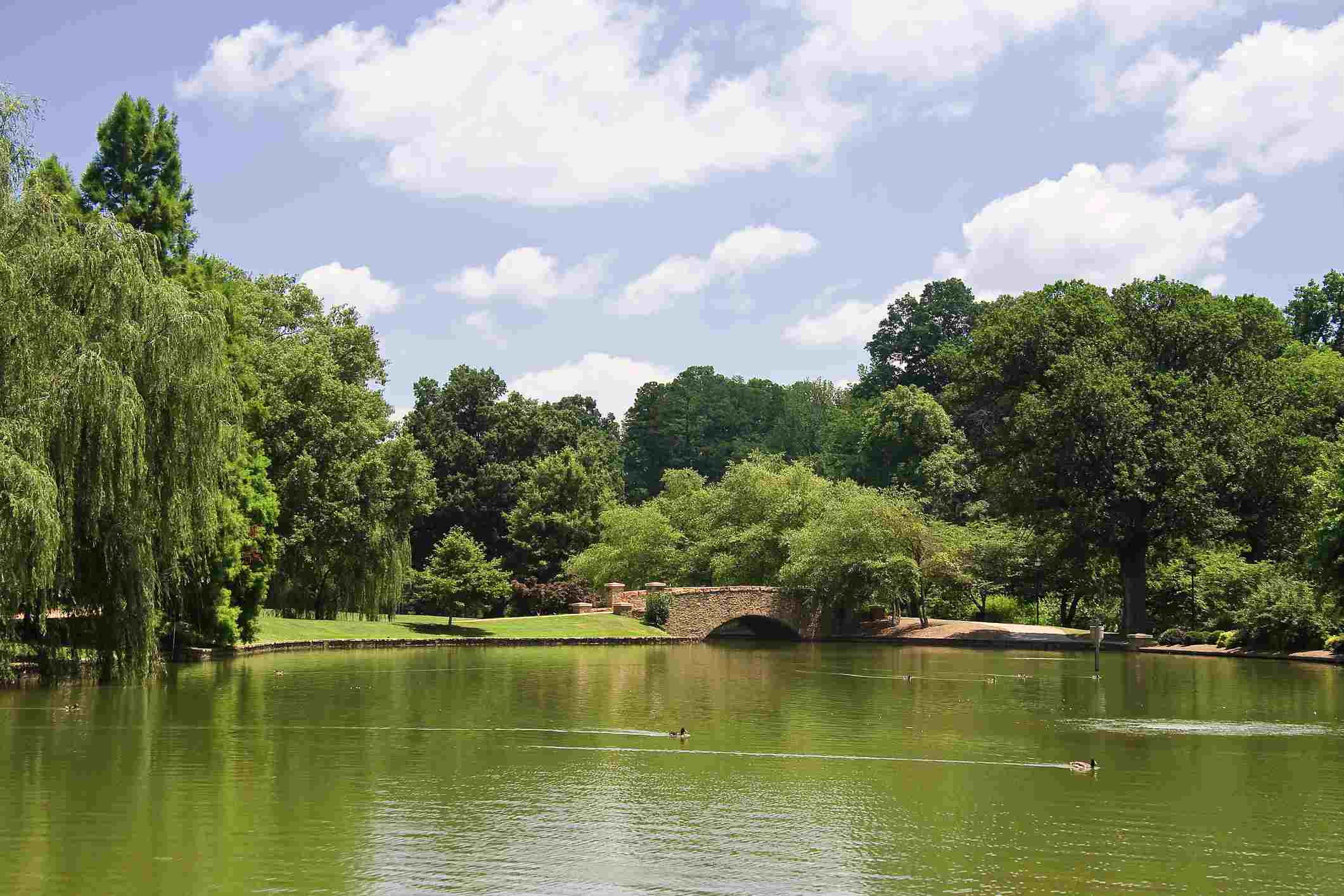 The lake at Freedom Park in the summer in Charlotte