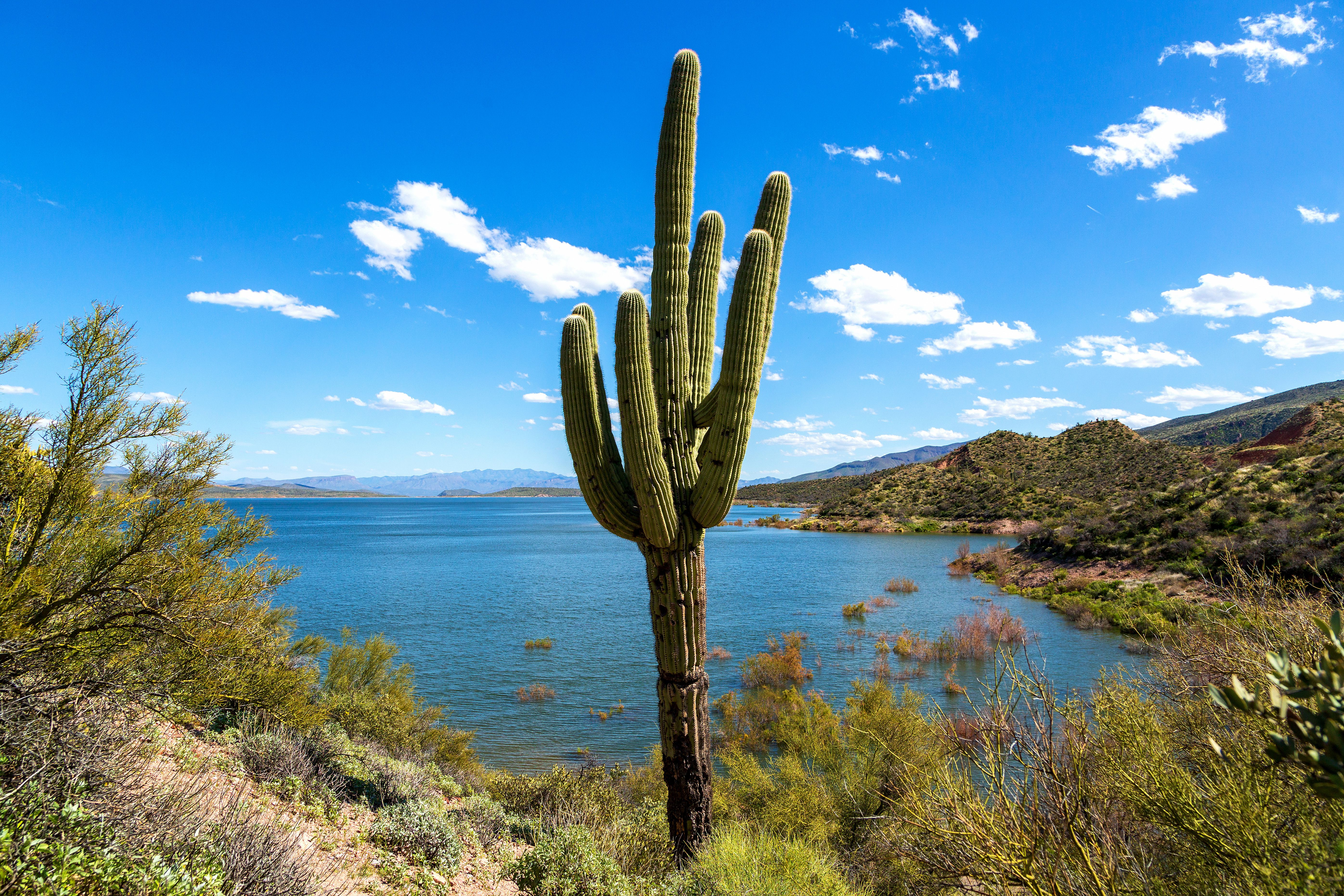 The Complete Guide to Arizona's Theodore Roosevelt Lake