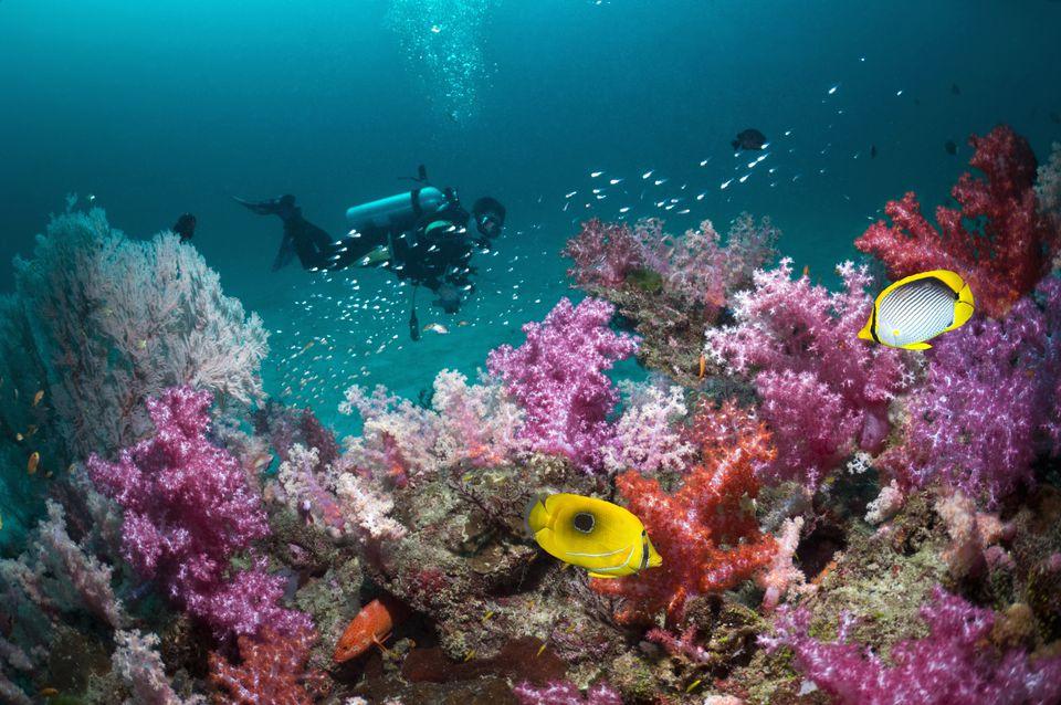 Buzo en arrecife en el mar de Andaman, Tailandia
