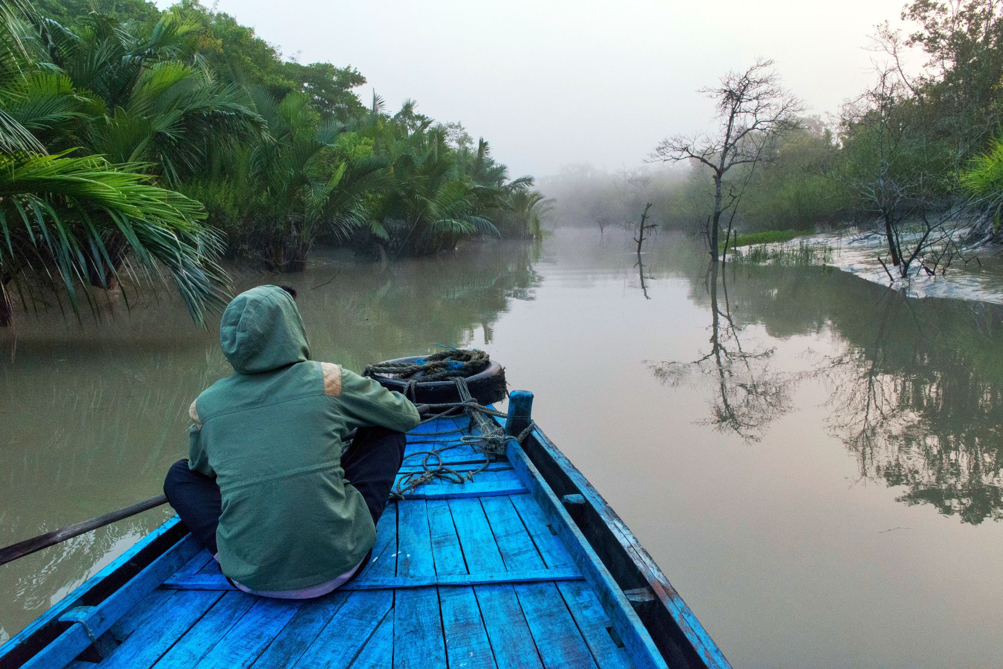7 Top Sundarban Tour Operators And Packages