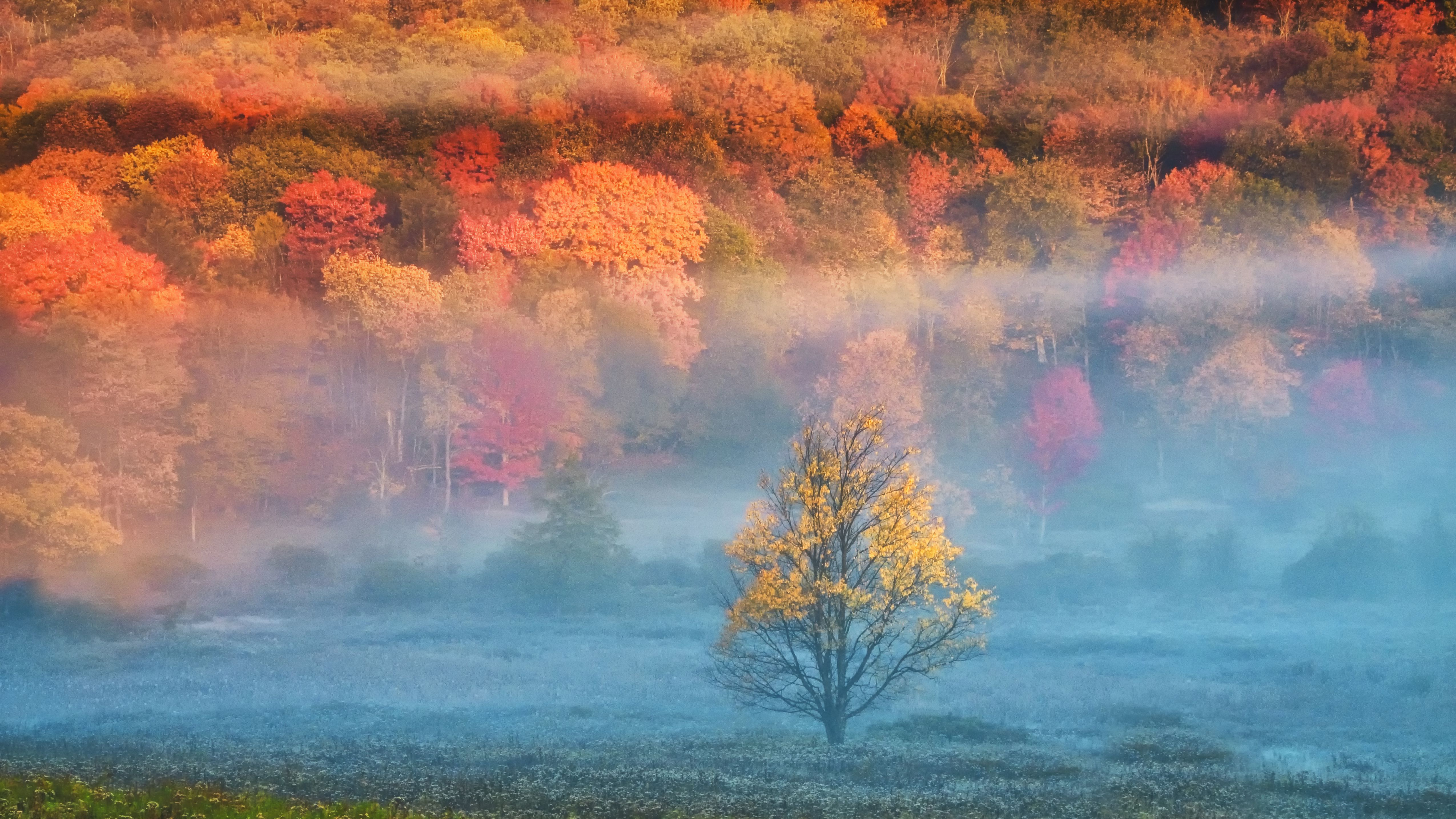 Fall Foliage Map 2020.A State By State Guide To Fall Colors