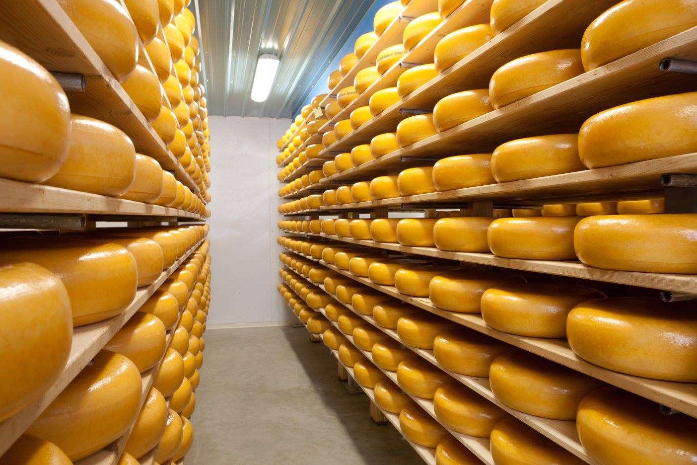 Estantes llenos de ruedas de queso gouda