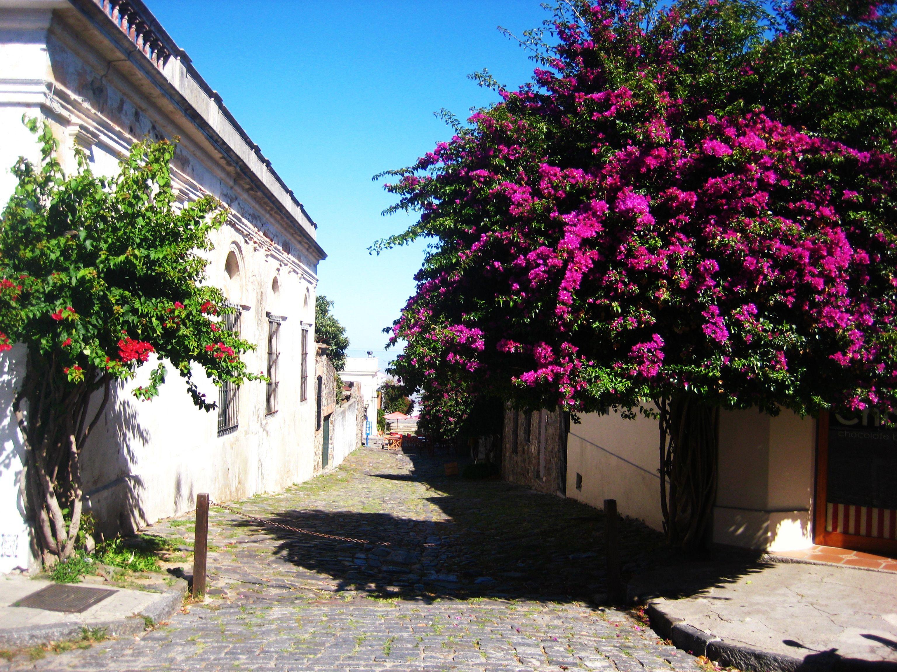 A cobblestone street in old town of Colonia del Sacramento