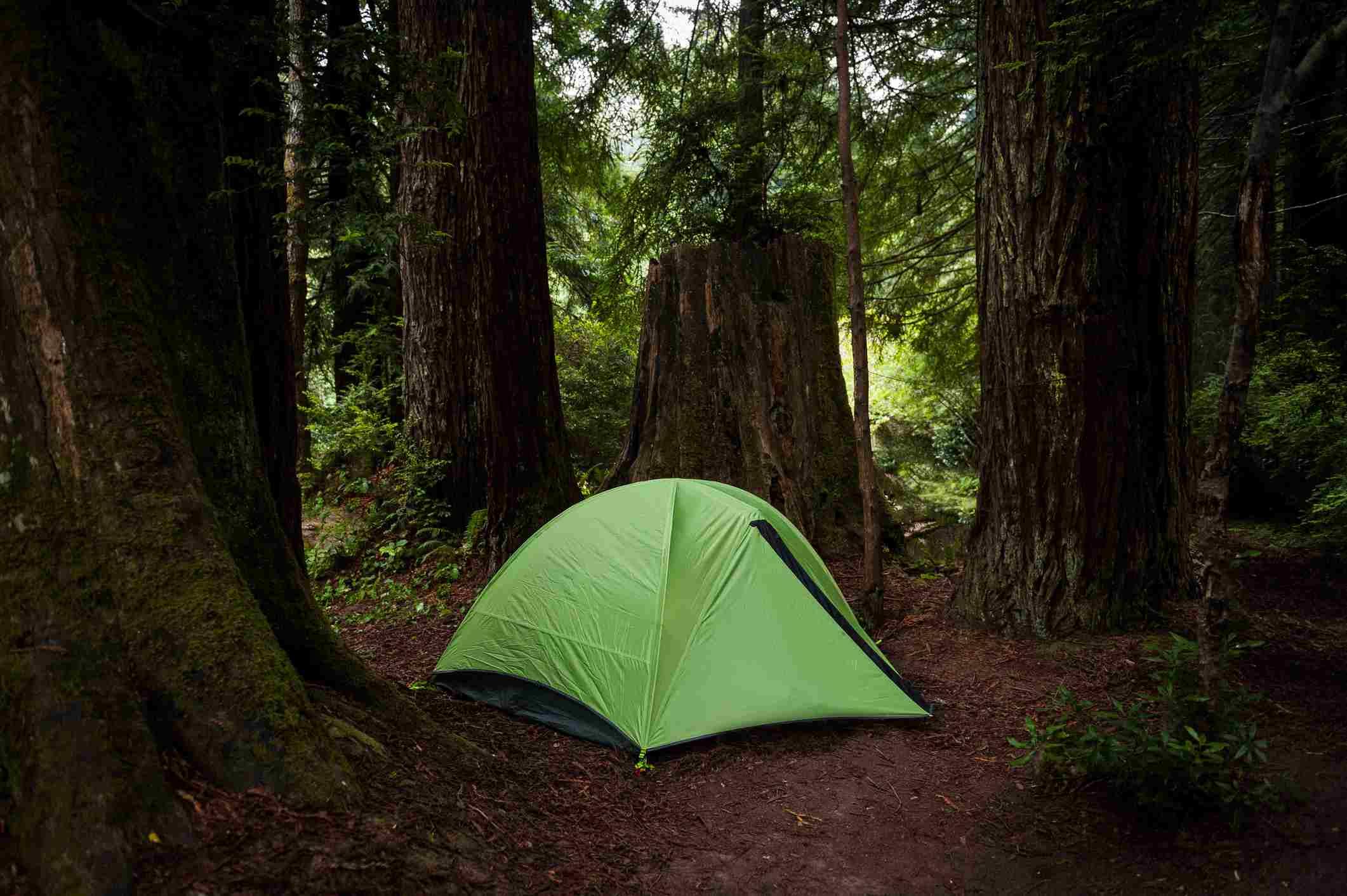 money-saving tips for visiting redwood national park