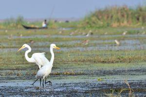 Birds at Mangalajodi in Odisha.