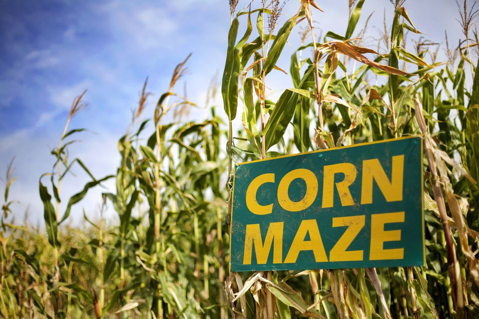 Corn Maze Sign in Corn Field