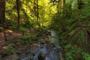 Forest Park Macleay Trail along Balch Creek in Portlan, Oregon