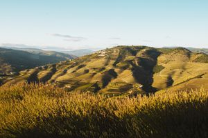 The rolling hills of the Vineyards in Douro during golden hour sunset