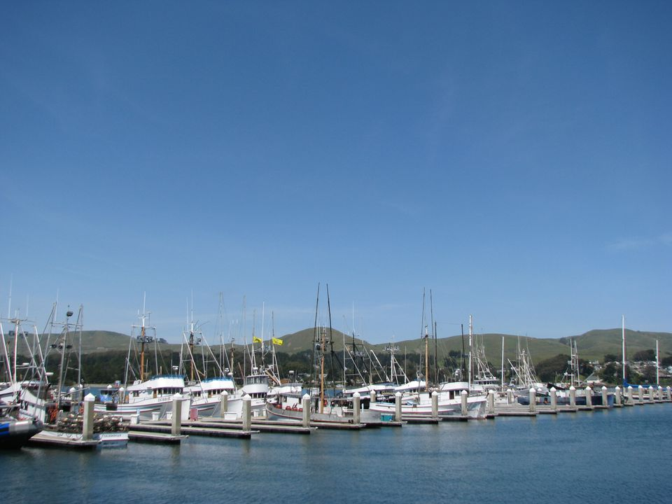 Spud_Point_Marina_2.JPG