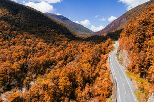 Road through dens forest in South Island, New Zealand.