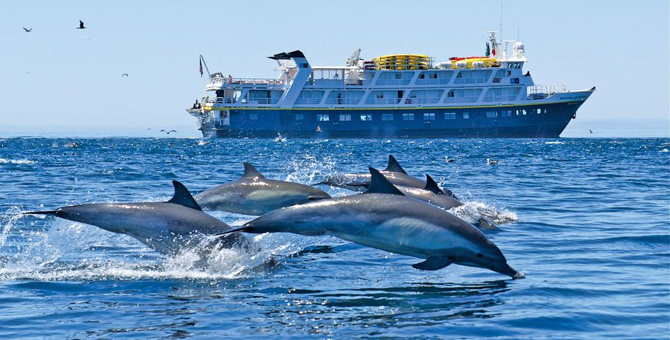 Dolphins in Baja California.