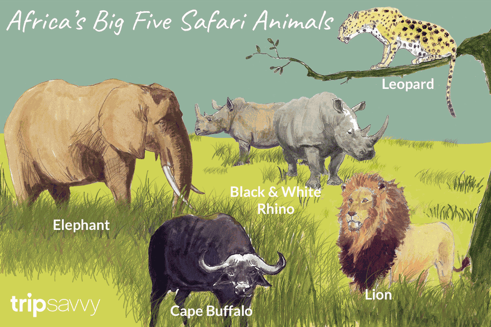 Africa's safari animals