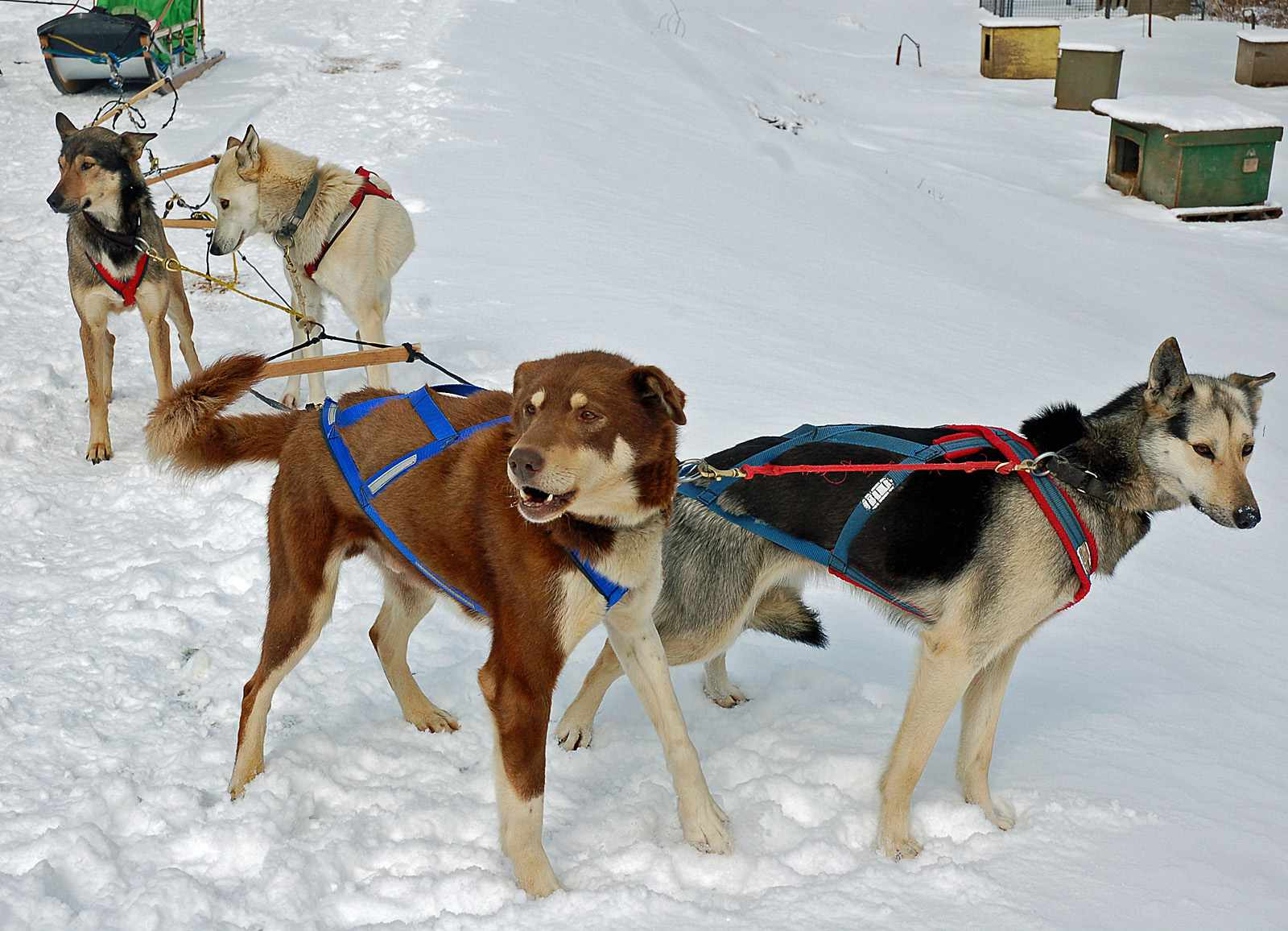 Muddy Paw Sled Dog Kennel in New Hampshire