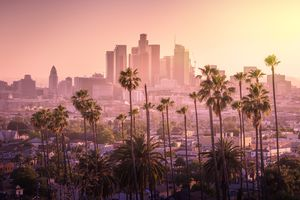 A picture of downtown Los Angeles buildings viewed through several nearby palm trees