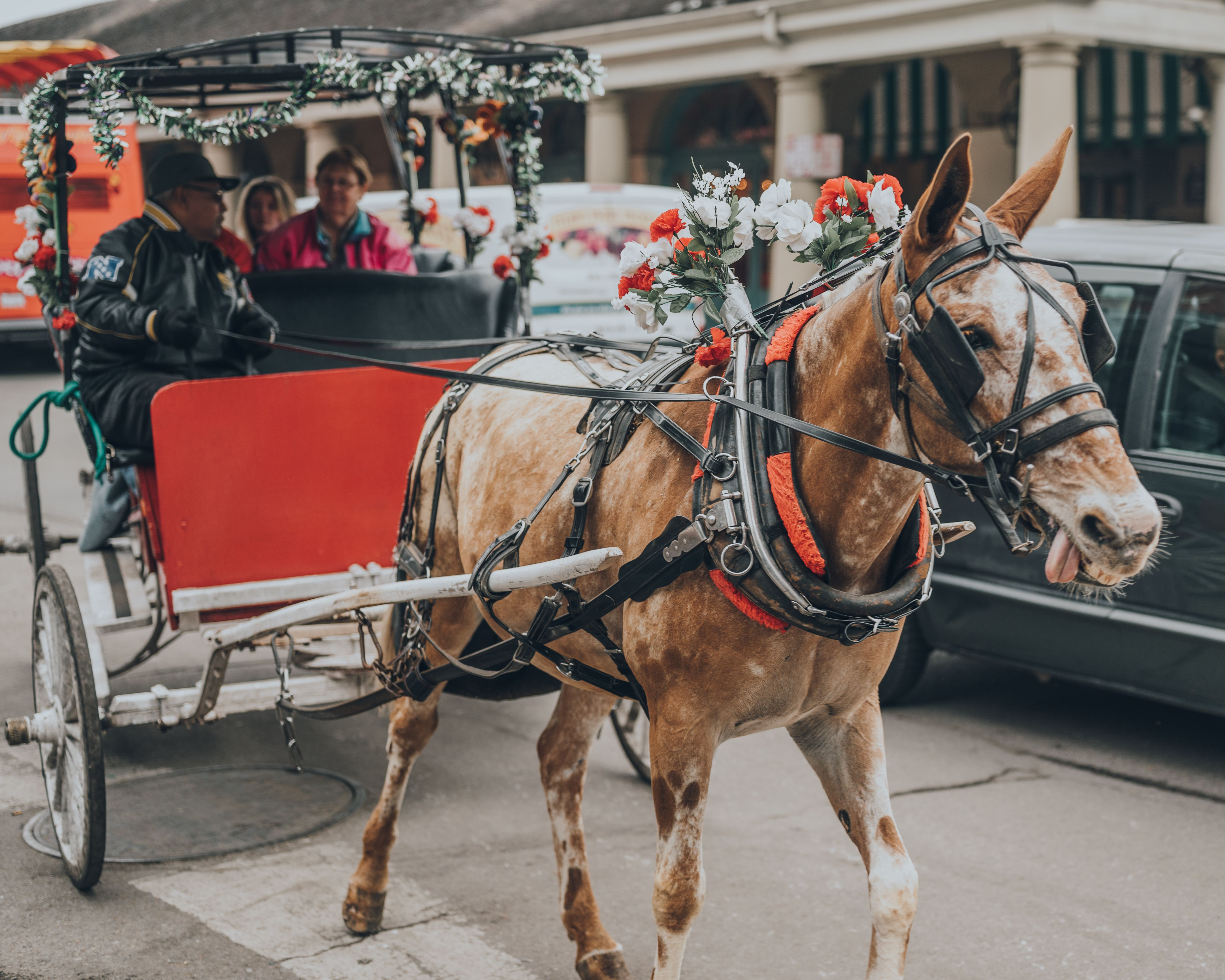 A horse drawn carriage in New Orleans