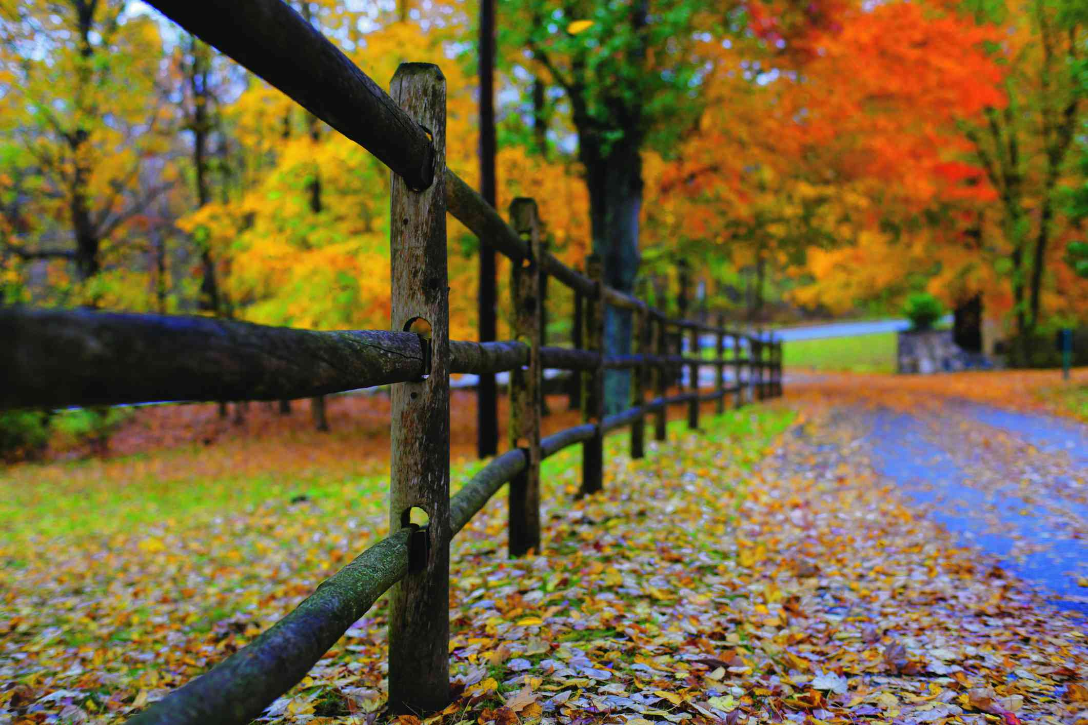 Long Island fall foliage
