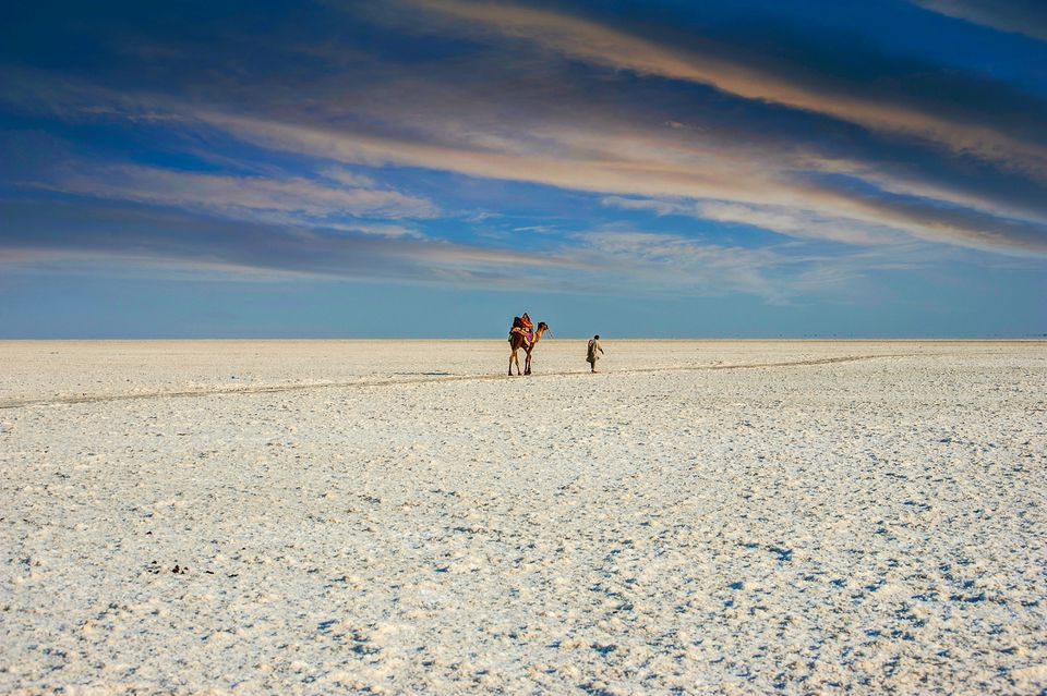 Camel and man are walking in white desert of Kutch